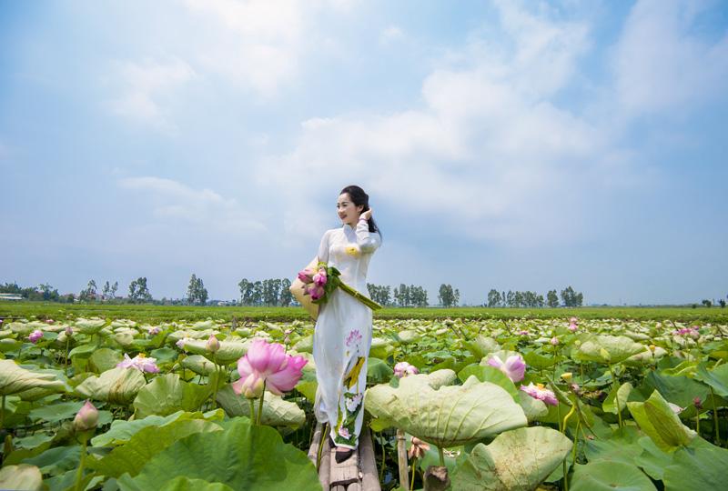 Vẻ đẹp tinh khôi cùng với hoa sen Việt Nam