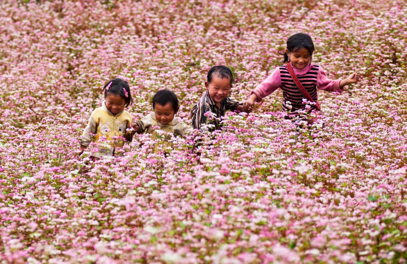 Phố Cáo -Pho Cao là nơi đầu tiên bạn nên ghé thăm để xem hoa Triangular hoa