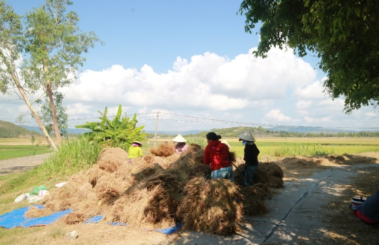 Rice-fields-in-Tuy-Hoa-Phu-Yen-is-regarded-as-the-biggest-in-the-Middle-of-Vietnam