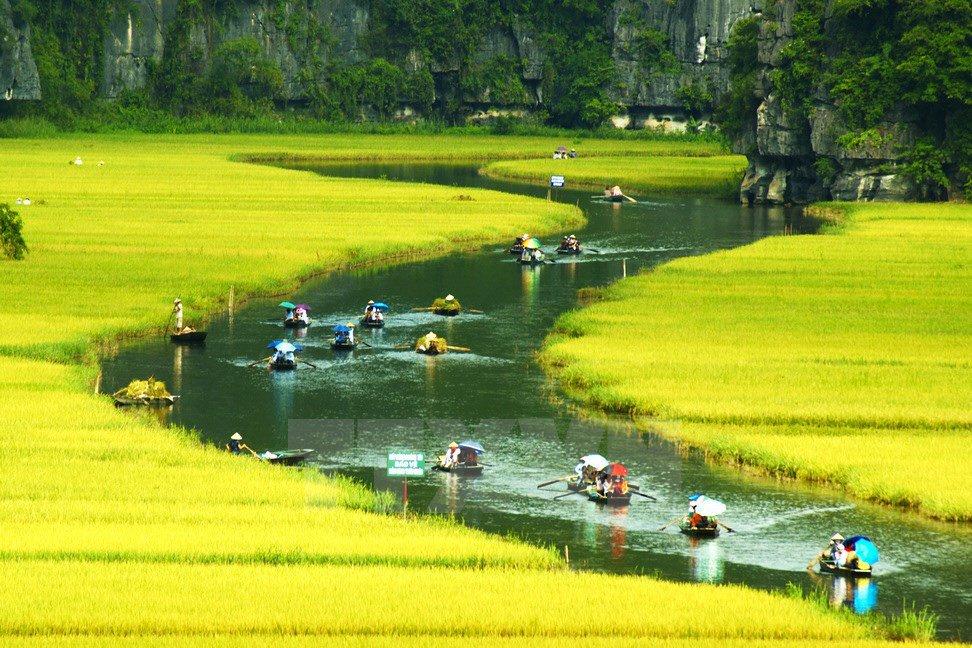 """Ngất ngây vẻ đẹp """"cánh đồng vàng"""" ở Việt Nam"""