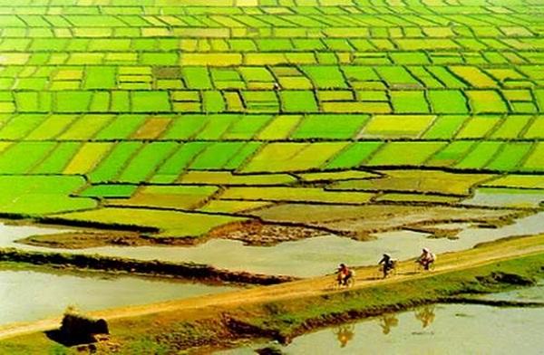 Khám phá các vườn cây ăn quả ở ĐBSCL Việt Nam