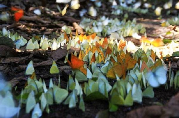 Trải nghiệm, khám phá vườn quốc gia Cúc Phương