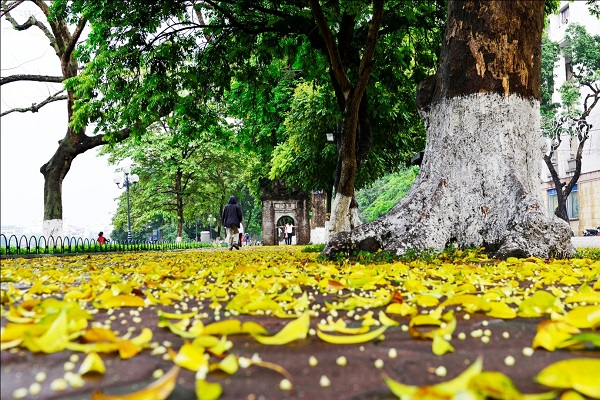 Yellow-leaves-1